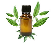 Applying Camphor Oil is one of the top ayurvedic hair loss remedies & an ideal hair growth oil. Read the many Camphor Oil hair benefits & Camphor Oil uses. Patchouli Perfume, Patchouli Oil, Patchouli Essential Oil, Essential Oil Uses, Perfume Oils, Camphor Oil, Amber Bottles, Hair Loss Remedies, Oil Benefits