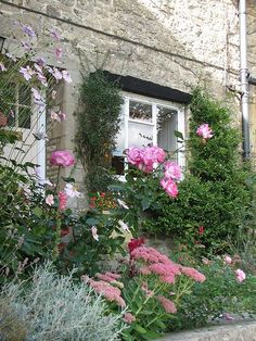 Classic cottage garden plants growing against side of english cottage