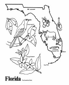 USAPrintables State of Florida Coloring Pages  Florida