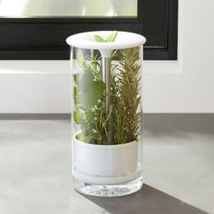 Glass Herb Keeper.  Keep herbs fresh and green longer. Designed to fit on a refrigerator shelf or door.