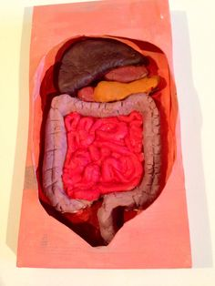 Week Digestive system The digestive system - cardboard and play dough. 5th Grade Science Projects, School Projects, College Organization, New Classroom, Play Dough, Homework, Anatomy, Diy Crafts, Teaching