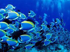Resultados de la Búsqueda de imágenes de Google de http://imagenesfotos.com/wp-content/2009/11/animales-marinos-1_min.jpg