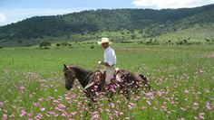Riding through wildflowers at Rancho Las Cascadas on a Mexico Ranch Vacation