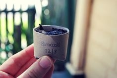 Recycle toilet paper rolls as planting pots