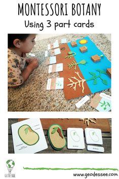 This lesson about seeds and the life cycle of a bean plant invites kids to experiment and ask questions about botany. It's full of fun and educational activities. grundschule Montessori Botany: Seeds and the life cycle of a bean plant Kindergarten Activities, Preschool Activities, Educational Activities, Seeds Preschool, Plant Lessons, Teaching Plants, Montessori Science, Planting For Kids, Montessori Materials