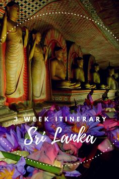 The perfect three week itinerary for a trip to Sri Lanka. Suitable for travellers on any budget.