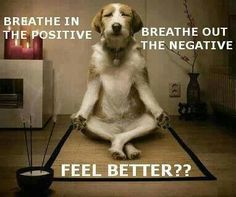 I am no stranger to meditation. The very first yoga class I ever took, over 18 years ago, happened to be a free meditation class on January I… Yoga Humor, Gym Humor, Online Meditation, Funny Dogs, Funny Animals, Cute Animals, Fu Dog, Dog Cat, I Love Dogs