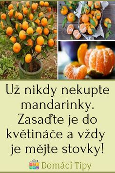 Pumpkin, Vegetables, Outdoor, Food, Diet, Balcony, Outdoors, Buttercup Squash, Meal