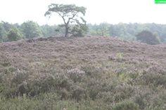 De Veluwe : de Oldebroekse Heide