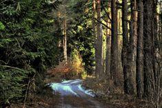 MYSLIVOST: Moje lesy, kopce, stromy a řeky, údolí, cesty, pol...