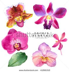 Image result for purple thai orchid watercolor