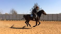 Mobile Photos, Mobile Photography, Horses, Animals, Beautiful, Animales, Animaux, Animal, Animais