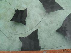 stingrays at atlantis! so much fun to watch them swim