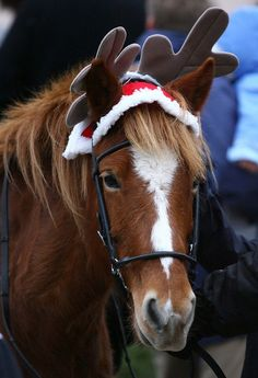 #Christmas horse (er, reindeer!)
