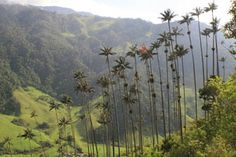 Plantation House Hostel near Valle de Cocora in Salento, Colombia. Hostel run by a British with a working coffee farm. Stunning surrundings! I stayed at the coffee finca and absolutely enjoyed it!!!