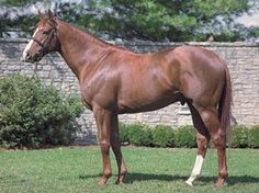 High Yield(1997)Storm Cat- Scoop The Gold By Forty Niner. 3x4 To Northern Dancer, %x5 To Princequillo, Bull Page, Native Dancer And Ribot. 11 Starts 4 Wins 4 Second. $1,170,196. Won 1999 Hopeful(G1), 2000 Blue Grass(G1), Fountain Of Youth(G1). Died In 2007 Of Apparent Heart Attack.