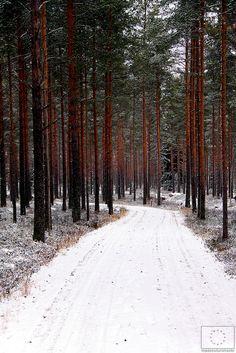 Trekking in Kalajärvi, Peräseinäjoki region   Havaintometsällä Kalajärvellä - Peräseinäjoki © Marjut Hakkola, 2014