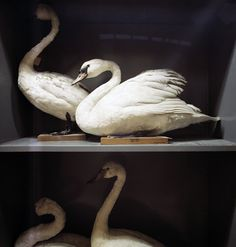 Richard Ross, Booth's Bird Museum, Brighton, England 1986