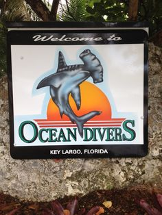 See 31 photos and 5 tips from 287 visitors to Ocean Divers. The Key Largo dive spots are some of the best in. Key Largo Diving, Vip Card, Kayak Paddle, Florida Keys, Snorkeling, Oceans, Four Square, Kayaking, Join