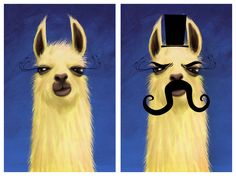 llamas. they hold a special place in my heart.