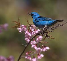 blu di primavera