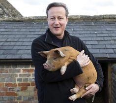 #PigGate: David Cameron denies pig allegation