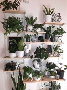 indoor plants plants wall wall decors diy plant decor wall living room decors interior home decorations. indoor plants plants wall wall decors diy plant decor wall living room decors interior home decorations. Easy House Plants, House Plants Decor, Plant Decor, Room With Plants, Living Room Wall Designs, Living Room Decor, Decor Room, Room Art, Living Rooms