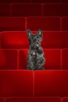 Lucy the Scottie Dog at the Guthrie Theater.