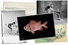 Museo de Nueva Zelanda (http://collections.tepapa.govt.nz/). Con imágenes en alta resolución bajo licencia creative commons y también otras en dominio público.