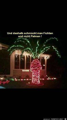 lustiges Bild 'Palmen werden nicht geschmückt.jpg'- Eine von 24397 Dateien in der Kategorie 'witzige Bilder' auf FUNPOT.