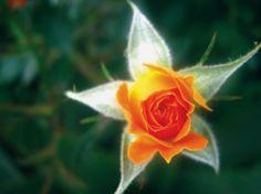 Christmas Nature Star   @FairMail - Fair Trade Cards - CS290-E