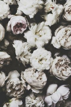 Roses Black And White HD desktop wallpaper : Widescreen : High . Black And White Roses Wallpaper images rose iPhone 6 Wallpapers White Tumblr, Belle Photo, Planting Flowers, Beautiful Flowers, White Flowers, White Peonies, Colorful Roses, White Roses Background, Grey Roses