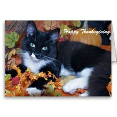Shop Happy Thanksgiving Holiday Card created by cathyfitzgerald. Personalize it with photos & text or purchase as is! Thanksgiving Greeting Cards, Thanksgiving Gifts, Holiday Cards, Holiday Ideas, Country Christmas, Cute Cats, Cat Lovers, Autumn, Fall