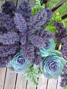 cabbage and kale! how beautiful for interplantings.