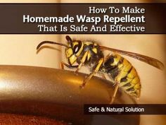 how to get rid of yellow jackets wasps and hornets for your garden wasp stings insect. Black Bedroom Furniture Sets. Home Design Ideas