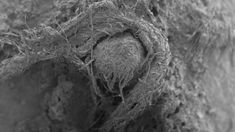 This electron microscope image provided shows part of a Neanderthal cord from Abri du Maras, France. Moncel via AP) Electron Microscope Images, Scanning Electron Micrograph, Scientific Reports, Microscopic Images, Early Humans, Latest Discoveries, Human Evolution, Animal Bones, Plant Fibres