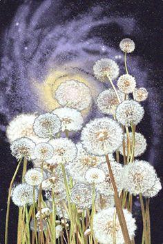 magic dandelions