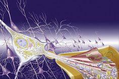 Promising results for new Alzheimer therapy | Neuroscientist News | neuroscientistnews.com