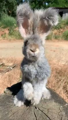 Lapin moelleux Fluffy Bunny Tiere - New Ideas Cute Little Animals, Cute Funny Animals, Cute Cats, Otters Funny, Funny Owls, Baby Animals Super Cute, Little Pets, Cute Animal Videos, Cute Animal Pictures