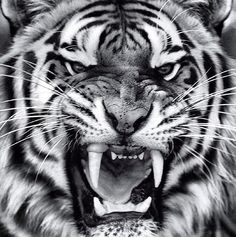 I've earned my stripes!!!