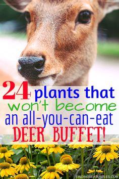 Gardening Organic Deer Resistant Perennials: Stop Planting An All You Can Eat Garden Buffet