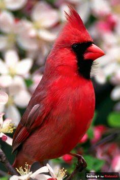 from Little Red Bird