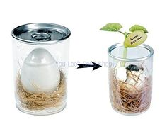 DIY Magic Egg in Transparent Can (Golden Yellow) Creative DIY http://www.amazon.com/dp/B00OBQ6W74/ref=cm_sw_r_pi_dp_fY.nub0KGE3QR