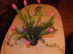 Tulipaner og eføy