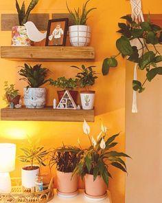 Modern and elegant vertical wall planter pots ideas 00052 Hanging Wall Planters, Vertical Wall Planters, Planter Pots, Black Mondo Grass, Peace Lily, Snake Plant, Wall Spaces, Air Plants, Houseplants