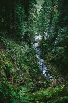 Olympic National Park Travel Guide — Adventures in Cooking Nature Pictures, The Fresh, Travel Usa, The Great Outdoors, Trip Planning, Adventure Travel, Places To See, Olympics, Travel Guide