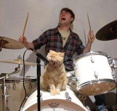 cat scratch fever...