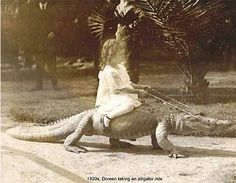 Doreen taking an alligator ride