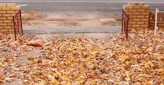 The Windmill Paddock: Composting Autumn Leaves the Easy Way.