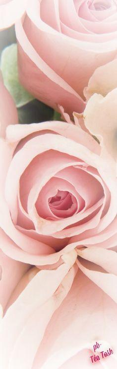 Romantic rosy pink
